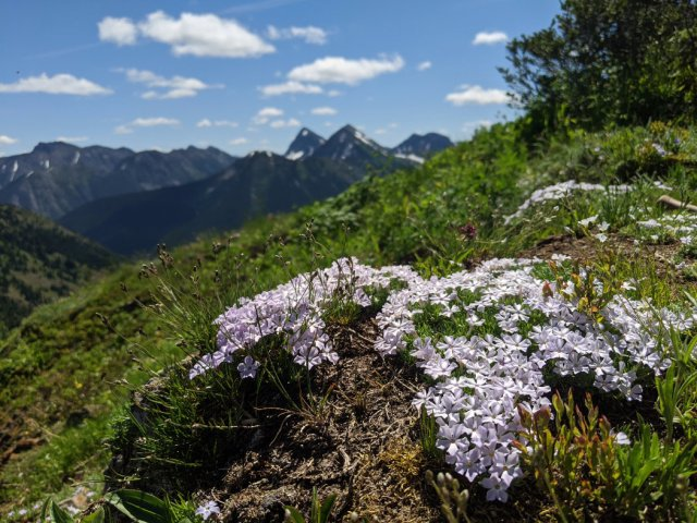 More wildflowers on the Skyline Trail