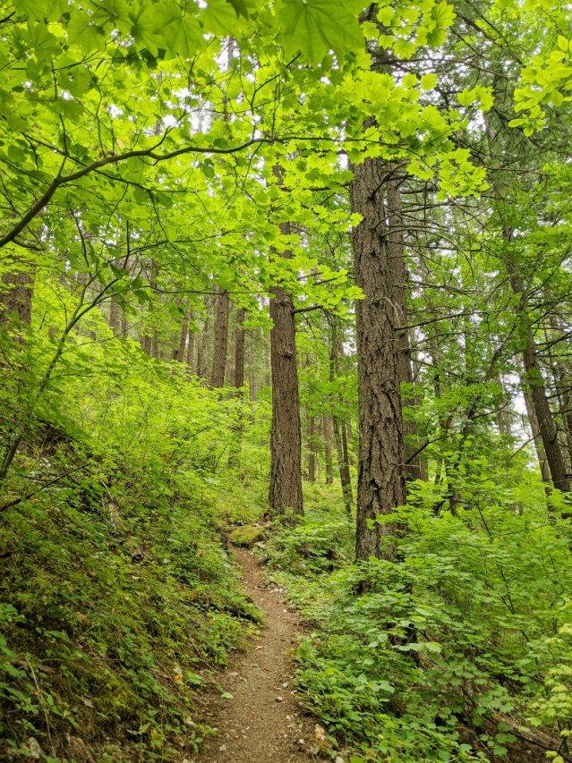 Nlaka'pamux forest views