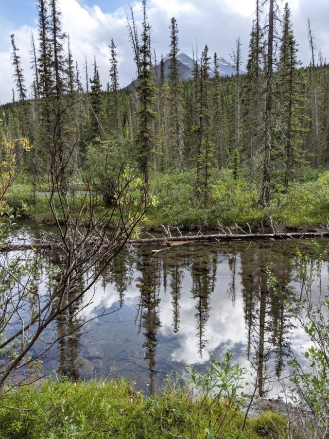 Reflections on the Bow River Loop near Lake Louise