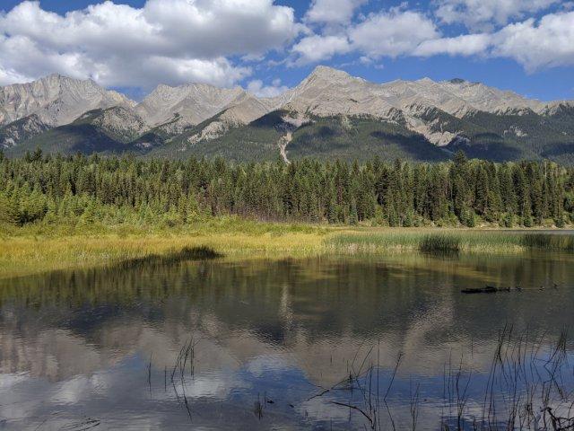 Dog Lake reed side