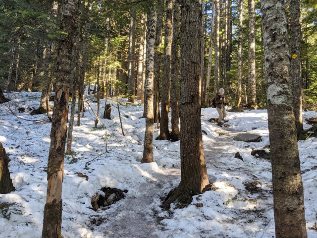 Snowline on the BCMC trail