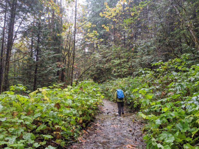 Start of the Crooked Falls trail