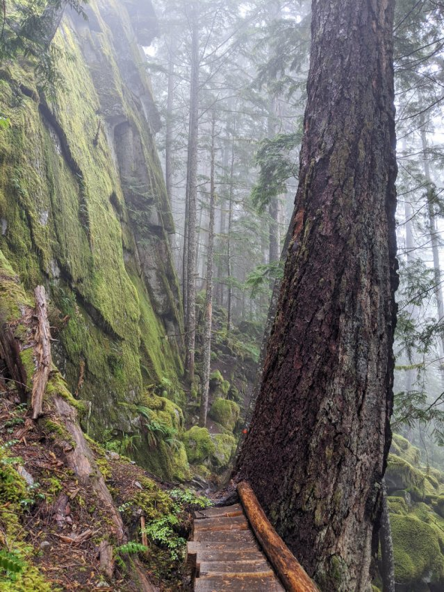 Huge trees and cliffs