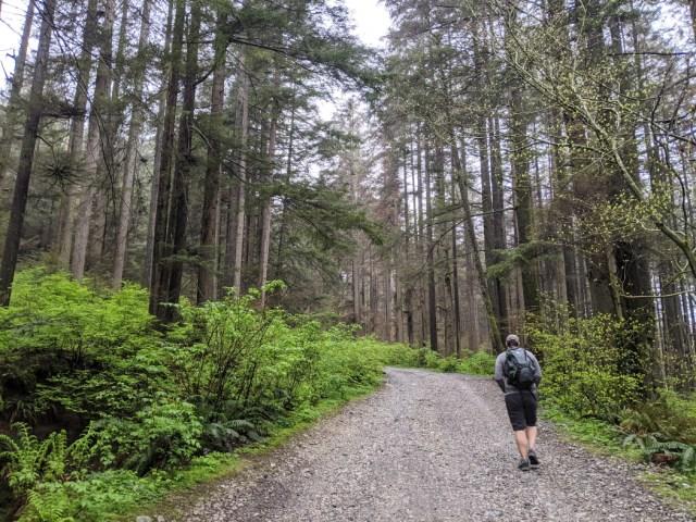 Lower Mount Fromme trails - Cedar tree trail