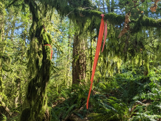 Amazing moss