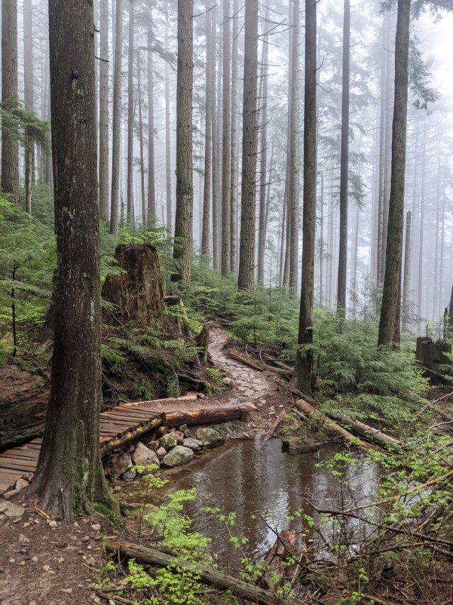 Trails, mist and puddles on Lower Mount Fromme