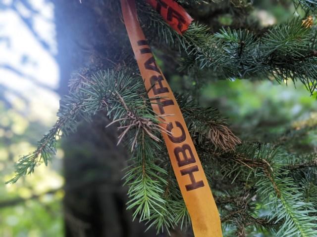 HBC trail flagging