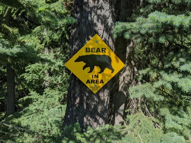 Bears in area