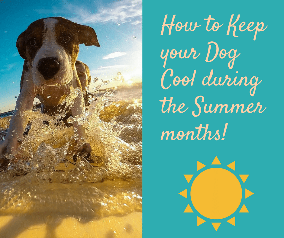 August  Official Dog Day Of Summer