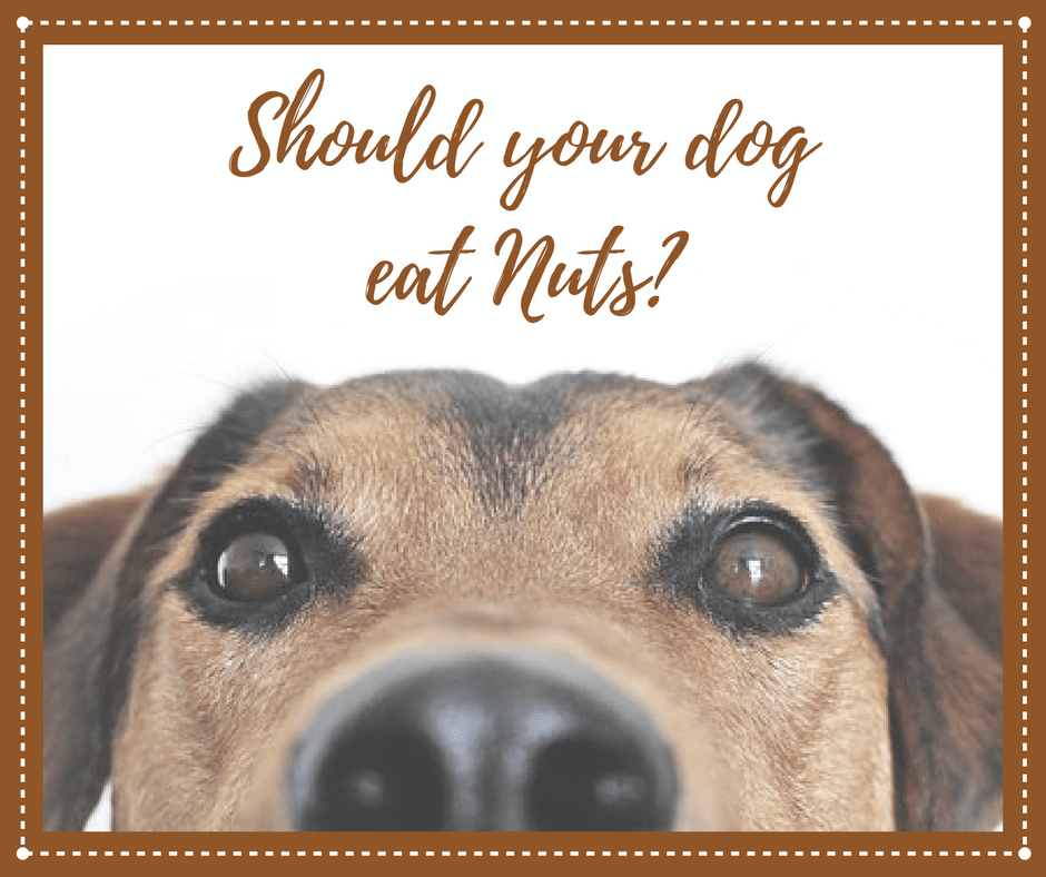 Is it safe for dogs to eat nuts?