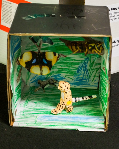 Johnny's diorama showing the cheetah that he sculpted out of clay. His accompanying report gave information about cheetahs.