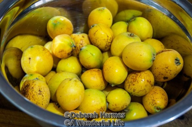 Bowl of loquats fresh off the tree.