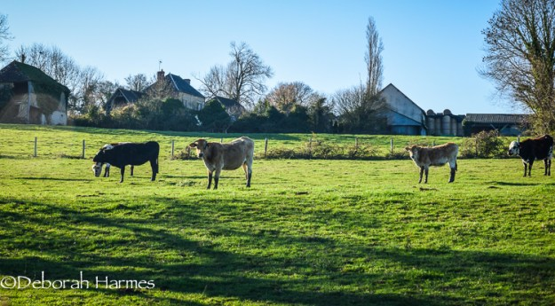 The pretty cows in the fields next door.