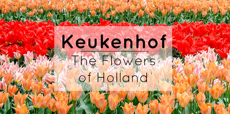 Keukenhof : The Flowers of Holland