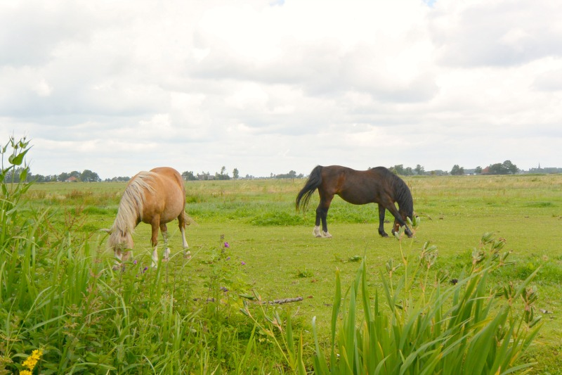 Waterland day trip horses
