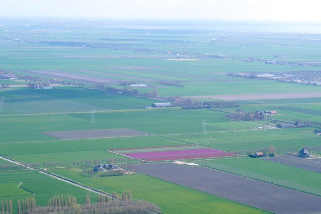 Tulip fields from above