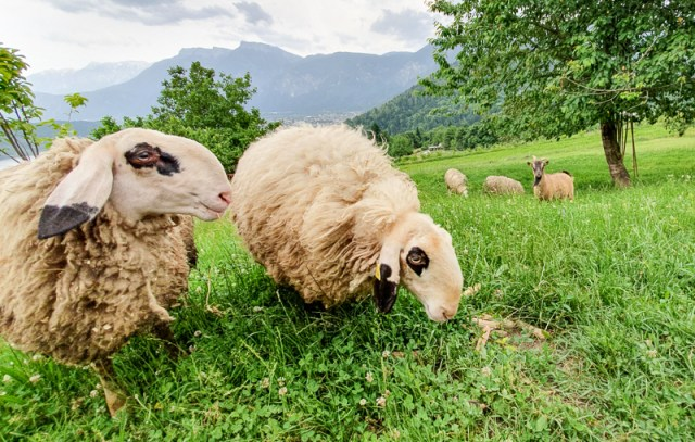 Animals in Trentino