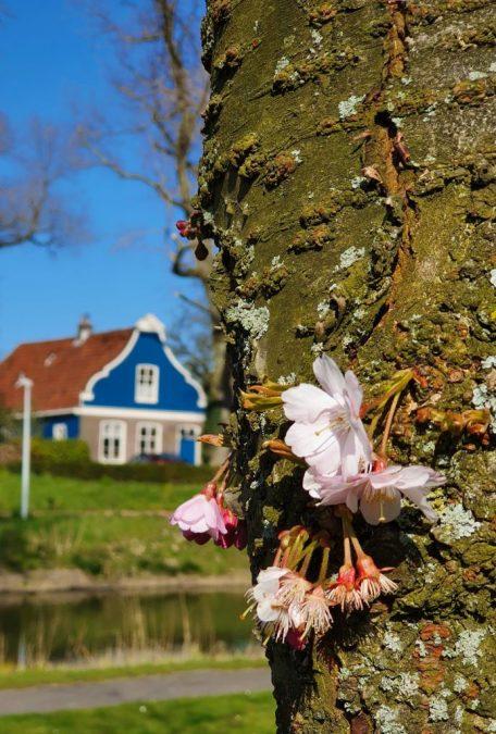 Amsterdam Noord home