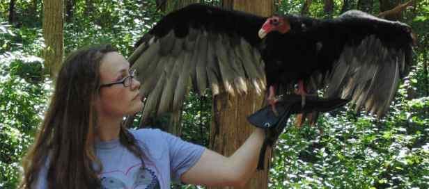 Image result for International Vulture Awareness Day: