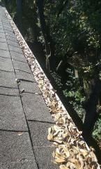 ambassador window cleaning - Charleston gutter cleaning
