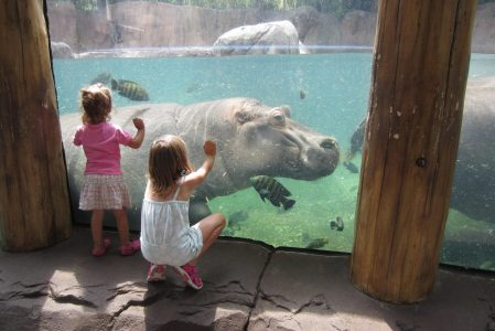 Travel Tips: Taking Kids to the St. Louis Zoo