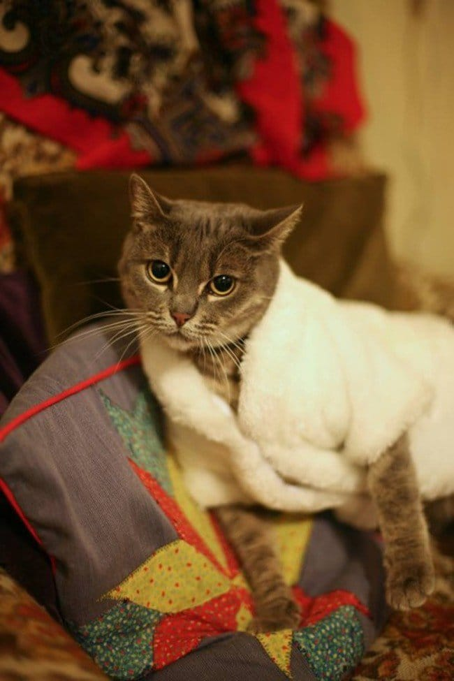 These 15 Cats Are So Stylish They Will Make You Look Bad