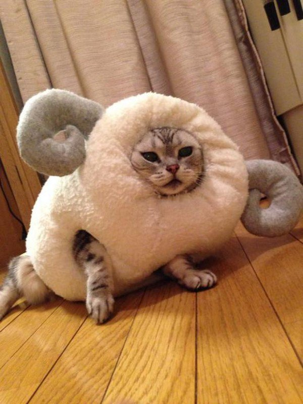 This Cat Celebrates The Chinese Year Of The Sheep In The