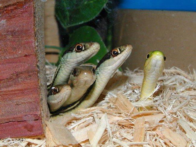snake group