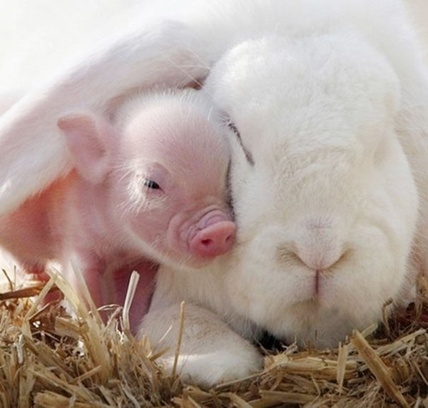 unlikely-sleeping-buddies-piglet-bunny