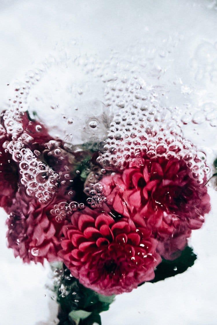 Photographer Lisa Sordini Captured These Beautiful Photos Of Flowers Underwater