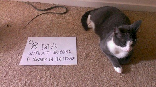 12 Images Of Mischievous Cats Causing Trouble
