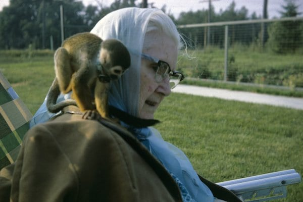 10 Of The Most Awesome But Unusual Service Animals