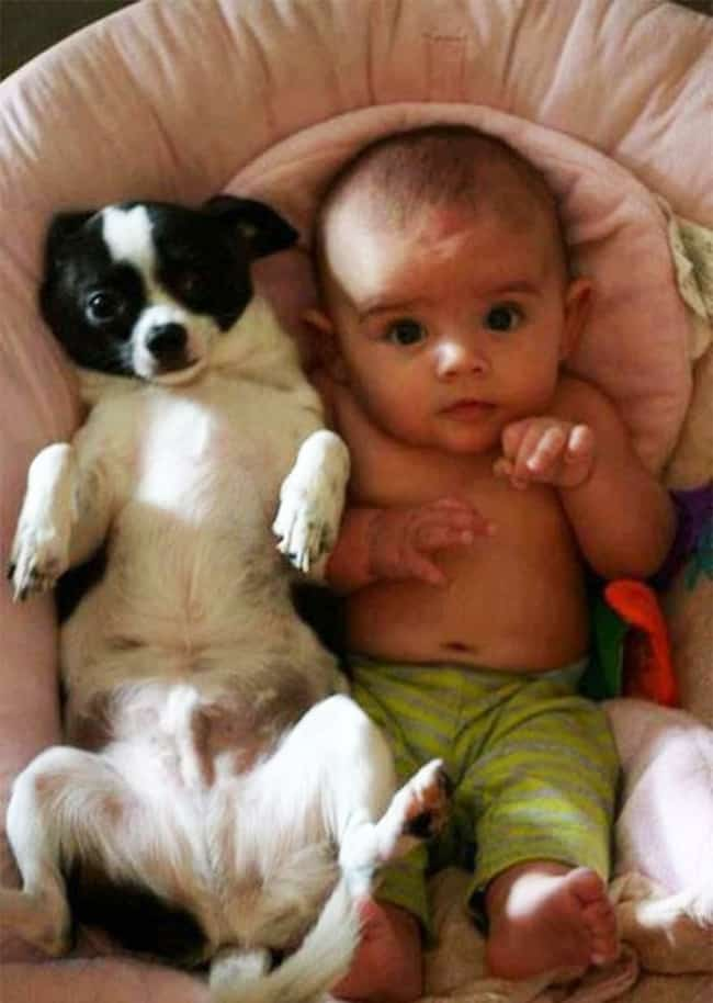 baby-and-dog-same-pose-adorable-photos