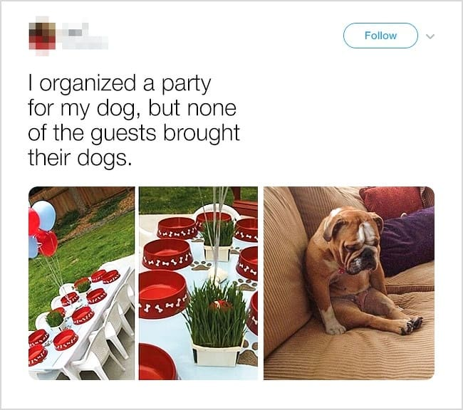 dog-party-without-dogs-hilarious-twist-ending