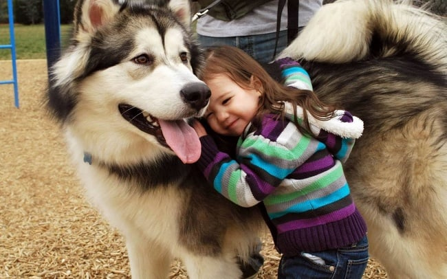 girl-enjoying-fluffy-dog-adorable-photos