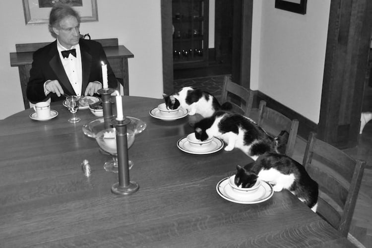 candlelit-dinner-with-cats-silly-things-bored-people-do