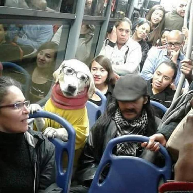 dog-commuter-outrageous-photos