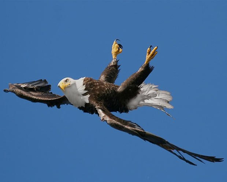eagle-backstroke-cool-photos