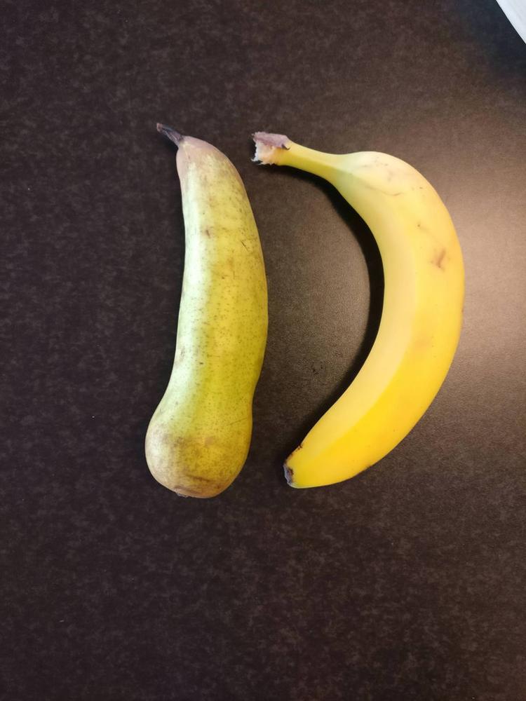 elongated-pear-cool-photos