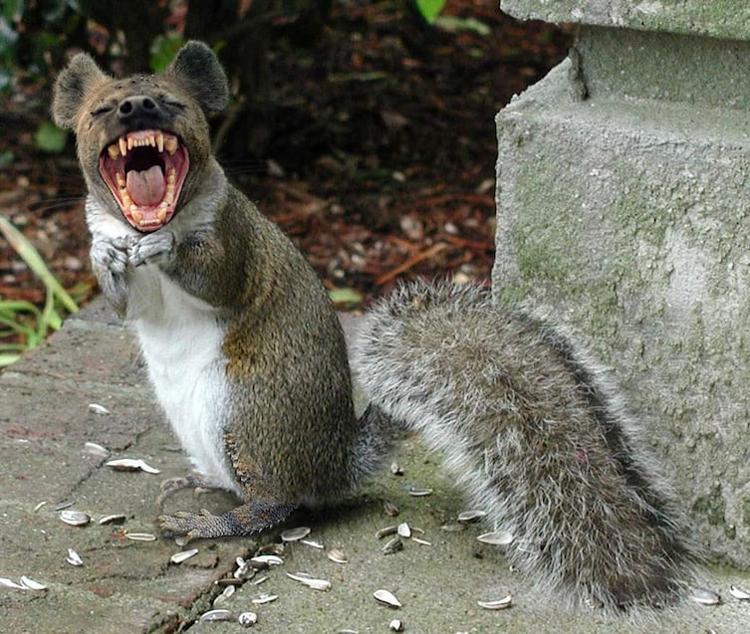 rodent-shriek-insane-photos