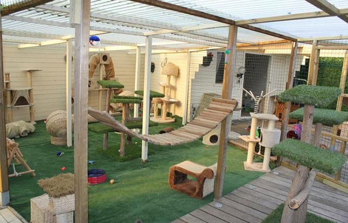 catios patio spaces for indoor cats