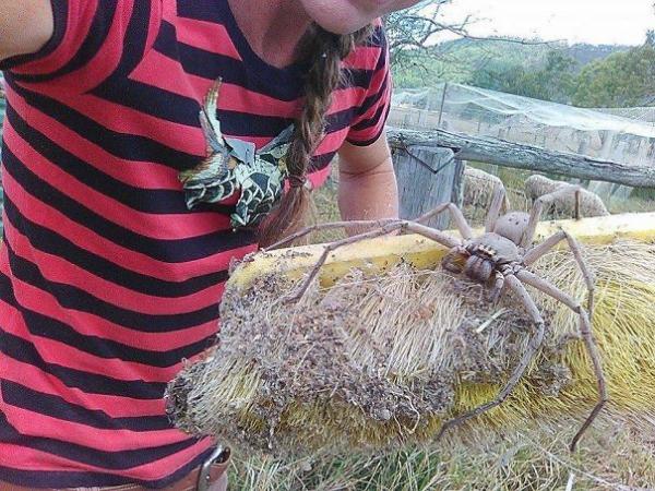 big spider scary animals in Australia