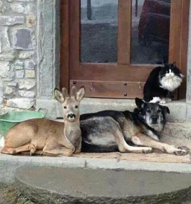 funny dog snapchats doggo brings friends home