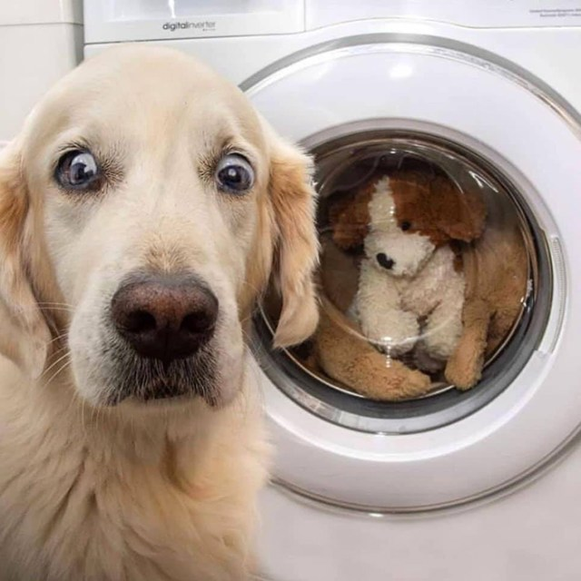 funny dog snapchats toy in the washer