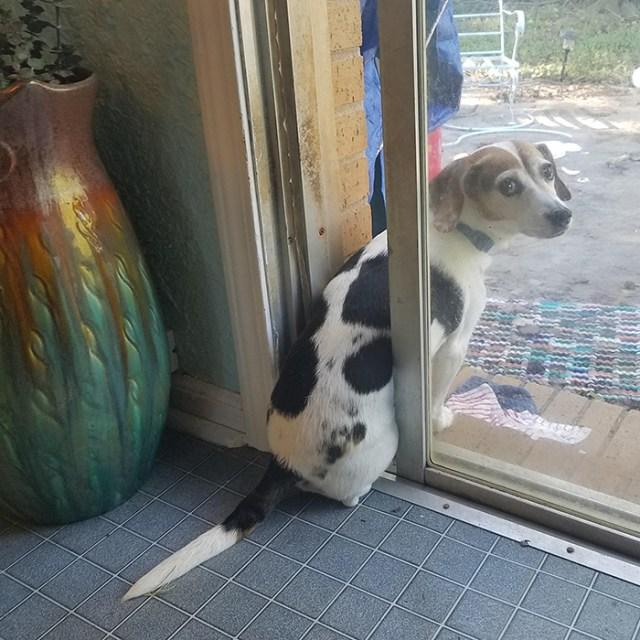 hilarious pet photos keeps door open