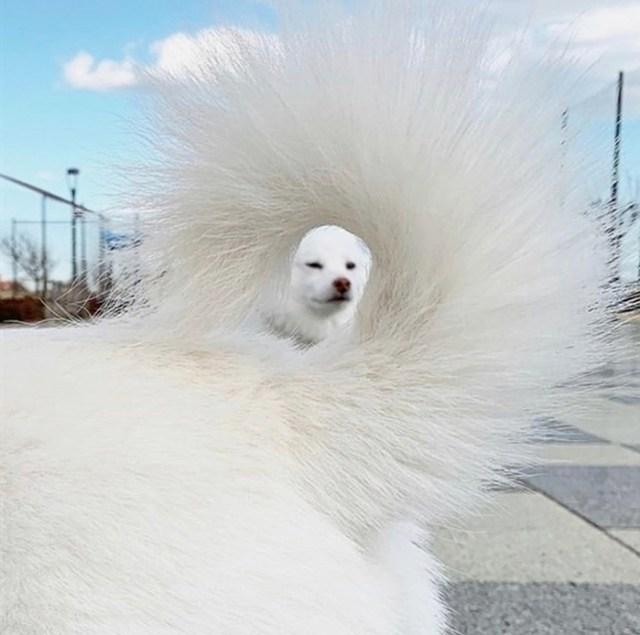 hilarious pet photos tail effect