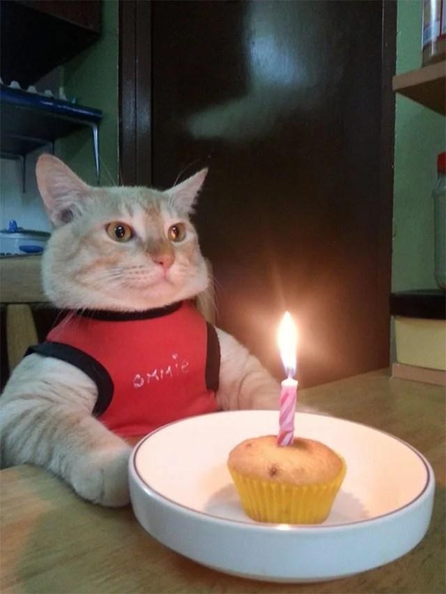 funny animals cat unhappy birthday