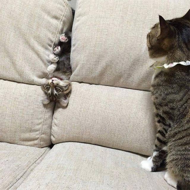 kitten stuck in sofa