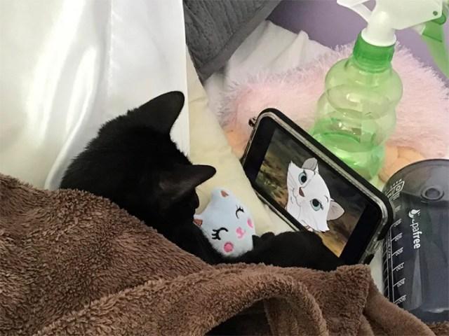 cat movie night with stuffed kitty
