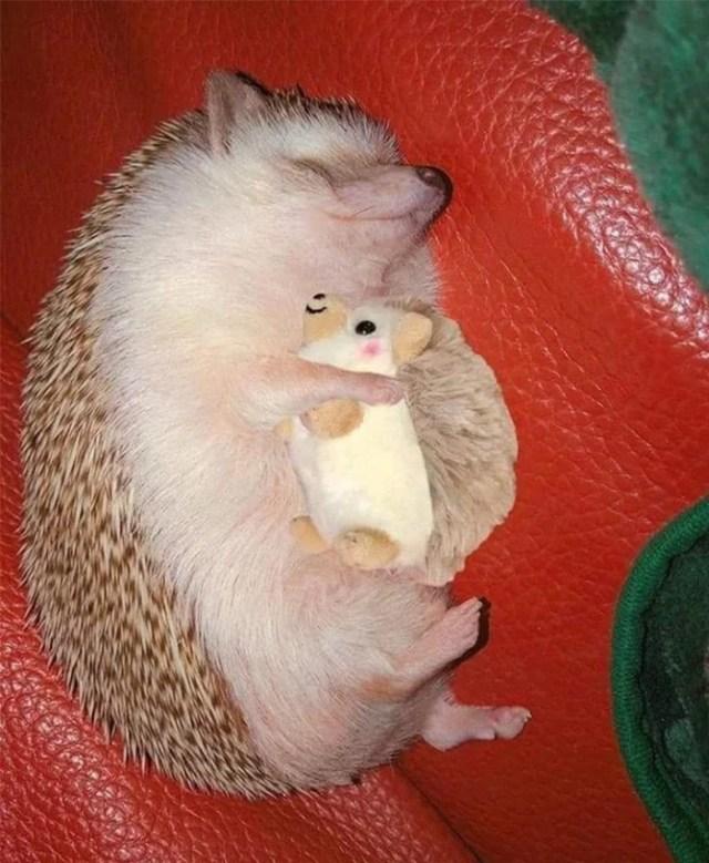 hedgehog with plushie
